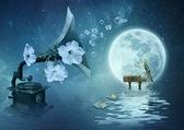 Moonlight Sonata — Stock Photo