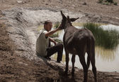 Young man and donkey — Stock Photo
