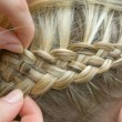 French braid — Foto de Stock