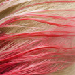 Stock Photo: Red color of hair