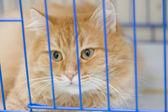 Kot w klatce — Zdjęcie stockowe