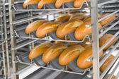 Nybakat bröd — Stockfoto