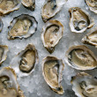 Opened oysters on ice - Stock Photo
