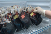 A bags of transfusion blood in a refrigerator — Stock Photo