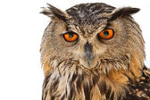 Owl look — Stock Photo
