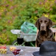 Dog Sitting at Table — Stock Photo