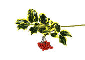 Ivy sprig and dangling red winter berries — Stock Photo