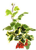 Holly branch, ivy and red winter berries — Stock Photo