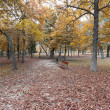 Autumn leaves on a park — Stockfoto