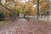 Autumn leaves on a park — Stock Photo