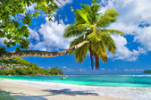 Idyllic tropical scenery - Seychelles — Stock Photo