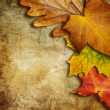 Autumn background — Photo #12767788