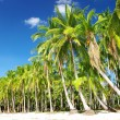 Tropical sunny beach — Stock Photo