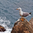 Italian scenery - sea gull on cliff - Stock Photo