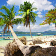 Foto Stock: Virgin tropics