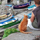 Gato amigável na grécia — Foto Stock