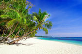 完璧な熱帯 — ストック写真