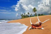 Tropical solitude - beautiful beach scene with sea shell — Stock Photo