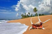 Tropical solitude - beautiful beach scene with sea shell — Stock Photo