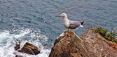 Italian scenery - sea gull on cliff — Stock Photo