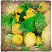 Vintage still life with lemons — Stock Photo
