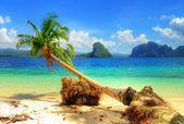 Trópicos puros — Foto Stock