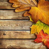 Autumn background — Stok fotoğraf