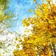Golden autumn - artwork in painting style - Stok fotoğraf
