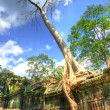 Ruins of old khmer temple with ancient trees — Stock Photo #12795658
