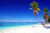 чистый тропиков — Стоковое фото