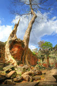 Ruins of old khmer temple with ancient trees — Stockfoto