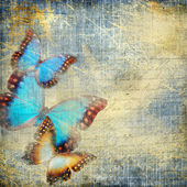 Shabby denim background with butterflies — Stock Photo