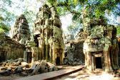 Templo de camboya. ta prohm — Foto de Stock