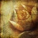 Grunge background with rose — Stock Photo #12810138