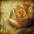 Grunge background with rose — Stock Photo