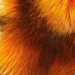 Nice fur fox texture — Stock Photo