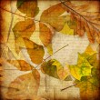 Retro styled autumn paper background with leaves — Stock Photo