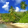 Foto de Stock  : Tropical paradise