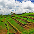 Pictorial rice terraces of Bali island — Stock Photo #18318493