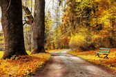 Golden autumn, path in forest — Stock Photo