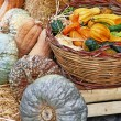 Autumn still life with pumpkins  — ストック写真