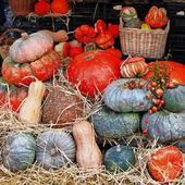 Pumpkins on market — Stock Photo