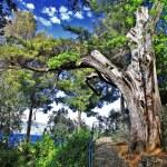 Большой старое дерево — Стоковое фото