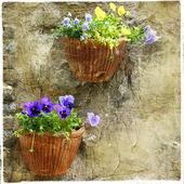 Pretty flowers — Stock Photo