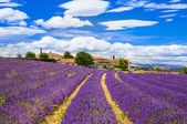 Feelds of blooming lavander, Valensole, Provence, France, europe — Stock Photo