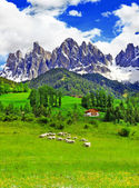 Sunny day in countryside, Dolomites, Alps — Stock Photo