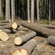 Stock Photo: Wood logging