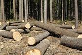 Wood logging — Stock Photo