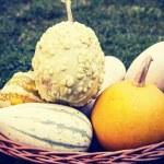 Vintage pumpkins in the basket — Stock Photo #31517151