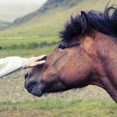 Kůň — Stock fotografie
